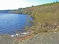 Whitefield Loch, near Glenluce - geograph.org.uk - 163173.jpg