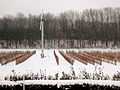 Windmill among the ice wine vines.jpg