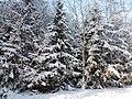 Winter in der Luckenwalder Heide - panoramio.jpg