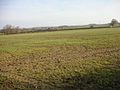 Winter wheat with tractor wheelings - geograph.org.uk - 92939.jpg