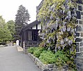 Wisteria, Abbey House Museum - geograph.org.uk - 1322874.jpg