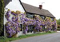 Wisteria Cottage, Marton (1) - geograph.org.uk - 1292434.jpg