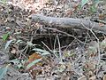 Wolf River Trails Lucius Burch Natural Area Memphis TN 07.jpg
