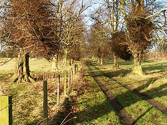 Balcarres House - Image: Woodland track near Colinsburgh geograph.org.uk 93849