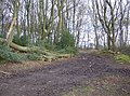 Woods at Walk Shaw - geograph.org.uk - 348543.jpg