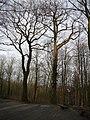 Wuppertal Barmer Wald 0009.jpg
