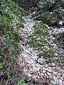 Yagur – Nesher, the Green Path – Mount Carmel 055.JPG