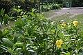 Yellowflowerscaterpillars.jpg