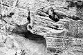 Zion National Park (15374199822).jpg