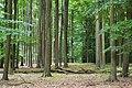 Zywiec Dziewieciolistny nature reserve in Puszcza Zielonka (6).JPG