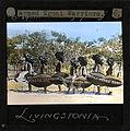 """Armed Ngoni Warriors, Livingstonia"" Malawi, ca.1910 (imp-cswc-GB-237-CSWC47-LS4-1-006).jpg"