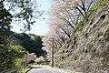 (千葉県) ふと、千葉県に足を伸ばすと桜の絨毯が敷いてありました。この辺は生活道路でもなく、人の通りが少ないこともあって、絨毯が残っているみたいですね。 - panoramio.jpg