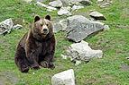 Ähtärin karhut 6.jpg