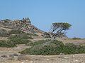 Εσωτερικό Νήσου Χρυσής - Chrysi Island Inland 01.jpg
