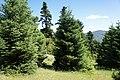 Προστατευόμενη περιοχή Natura (Ερύμανθος) 05.jpg