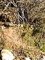Ρέμα κοκκιναρά 3 - panoramio.jpg