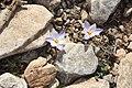 Χαρακτηριστικά λουλούδια.jpg