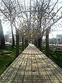 Аллеи Душанбе.jpg