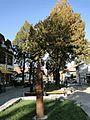 Банско November 2012 - panoramio (125).jpg
