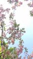Весна в городе 14.png