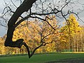 Гатчинский парк, октябрь. 04.jpg