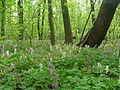 Голосіївський ліс20.JPG