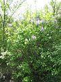 Дендрологічний парк 112.jpg