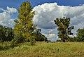 Дерева та небо.jpg