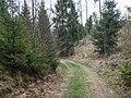 Дорога через лес - panoramio.jpg