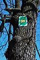 Дуб Відун DSC 0157.jpg