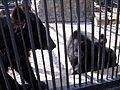 """Зоопарк """"Роев ручей"""" (031).JPG"""