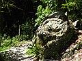 Камень в тисо-самшитовой роще.jpg