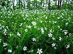 Квітки як зорі.jpg