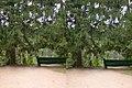 Кисловодск. Скамейка под елями (X-3D stereo). 22-09-2010г. - panoramio.jpg