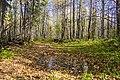 Лесные тропы MG 4931.jpg