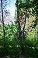 Наводницкий парк в Киеве. Фото 20.jpg