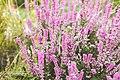 Позднее цветение в Ботаническом саду.jpg