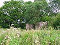 Руины - panoramio (21).jpg