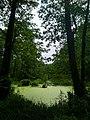 Сказочный лес в заповеднике.jpg