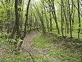 Украина, Киев - Голосеевский лес 13.jpg