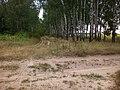 У лісосмузі - panoramio.jpg