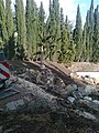 Японский сад, каменное дерево - panoramio.jpg