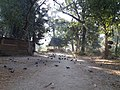 श्लेष्मान्तक वन (मृगस्थली) 06.jpg