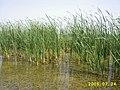 小河套湿地保护区 - panoramio.jpg