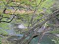 山の春 - panoramio.jpg
