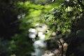 渓流の印象-Hommage à Terri Weifenbach - Flickr - けんたま-KENTAMA.jpg