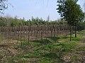 竹叶海公园里有大片修剪整齐的花木,春天一定花团锦簇,绿意盎然。 - panoramio.jpg