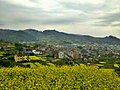 镜岭的油菜花 - panoramio.jpg