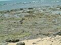 龍門海邊地形2.JPG