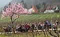 003 2011 03 27 Fruehling.jpg